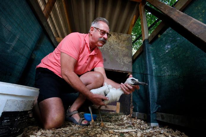 Piet van Andel helpt in 2018 een zwak ooievaarsjong.
