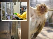Toch méér dierproeven ondanks wens om te minderen: 'Er zit absoluut geen verbetering in'