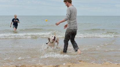Oostende zet politie in tegen hondenpoep op strand