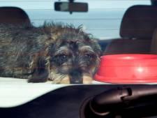 Baasje laat hond 'vijf minuten' achter in auto, temperatuur: 45 graden