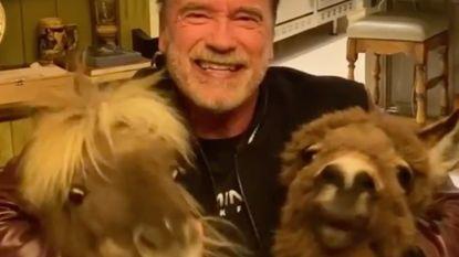 """Huisdieren Arnold Schwarzenegger stelen de show op sociale media: """"Wat doet die ezel in de keuken?"""""""