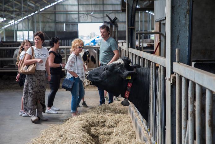 Bezoekers kijken tijdens de eerste Leegvelderdag in Deurne rond in de stal van het melkveebedrijf van de families Van Leeuwen en Manders. foto Ton van de Meulenhof