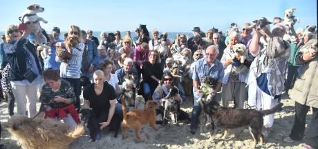 Hondenbezitters massaal aanwezig op het Badstrand