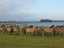 Hoge waterstand in Brabant levert prachtige foto's op