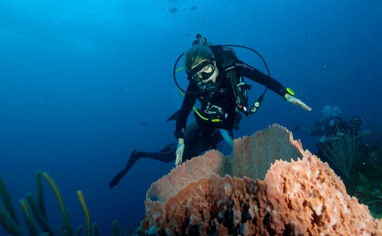 Koning Willem-Alexander en koningin Maxima doken in 2017 naar het koraal bij Saba. Beeld Photo News