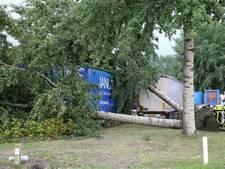 Twee grote bomen omgewaaid op industrieterrein Weststad in Oosterhout