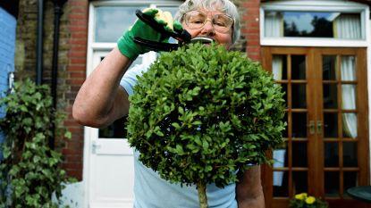Tot twee jaar cel voor vier Fransen voor diefstal halsketting tuinierende man