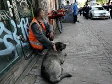 Strenge vorst? Hond van dakloze opgehaald en naar asiel gebracht