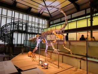 Dinosaurus Ben 'geboren' in museum voor Natuurwetenschappen
