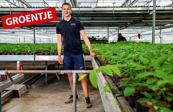 Groentje; Stan de Groot aan het werk bij Nolina Kwekerijen. Foto: Frank de Roo