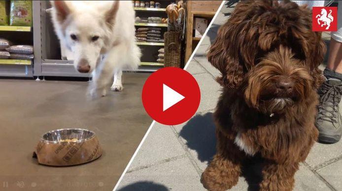 Wat kiest de hond: vegetarische brokken, of brokken met kip en kalkoen?