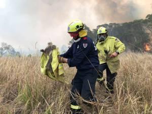 """Les koalas décimés par les incendies en Australie: """"C'est juste Armageddon, vraiment"""""""