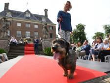 Honden van adel: Kasteel Amerongen opent Deftige Dieren-tentoonstelling
