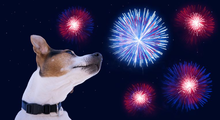 Bij dieren lokt vuurwerk vaak paniek uit.