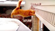 VIDEO. #FRIYAY! Ook deze schattige viervoeter worstelt met het winterweer