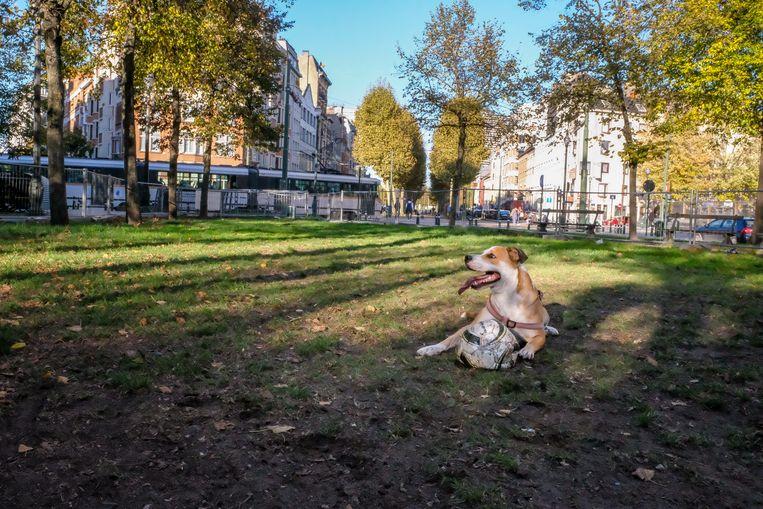 Hondenloopweide