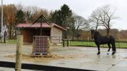 """Ronsese campus van pedagogisch centrum Wagenschot krijgt 5.000 euro subsidie voor paardentherapie: """"De paarden houden onze jongeren een spiegel voor"""""""