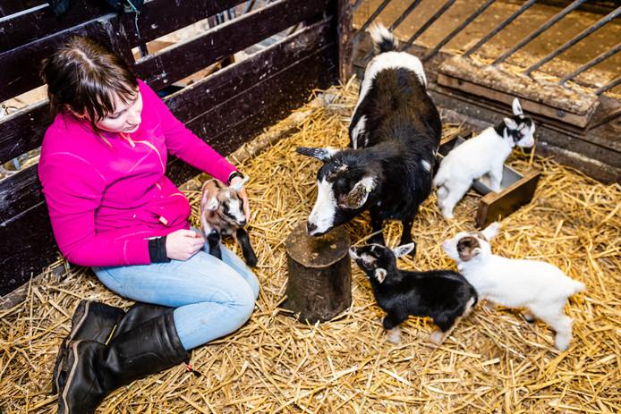Marenna Pellegrom helpt waar nodig bij de geboortegolf van geitjes op de kinderboerderij