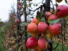 Nieuwe afspraken met Utrechtse fruitsector over bestrijdingsmiddelen in grondwater