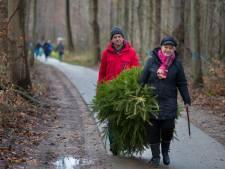 Opnieuw 'kerstboomtransplantatie' in Kuinderbos door droge zomer