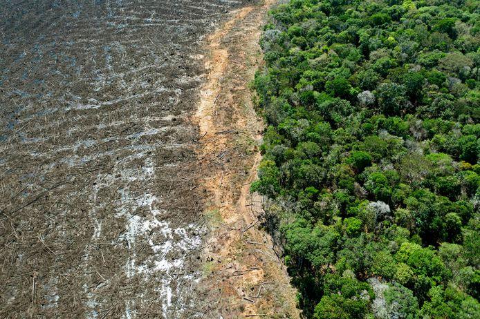 Ontbossing in het Braziliaanse Amazonegebied. Beeld van augustus dit jaar.