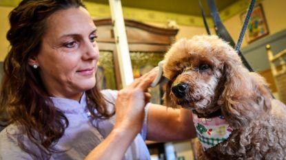 Trimsalons voor honden en katten mogen vanaf 11 mei weer open