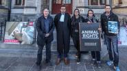Animal Rights en Gaia voeren actie aan rechtbank, maar rechtszaak tegen uitbater slachthuis Tielt uitgesteld