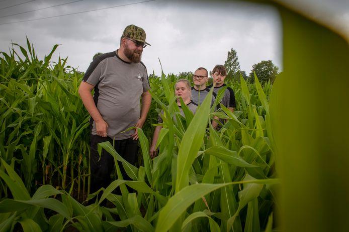 Vier waaghalzen zoeken hun weg door de maisdoolhof, vlnr Matthijs, Debbie, Nick en Tim. ,,Waar is de uitgang?''
