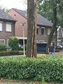 Boom aan de Ooivaarsrijst in Someren getroffen door bliksem.
