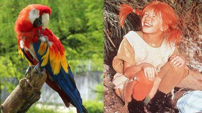 Papegaai van Pippi Langkous viert 50ste verjaardag