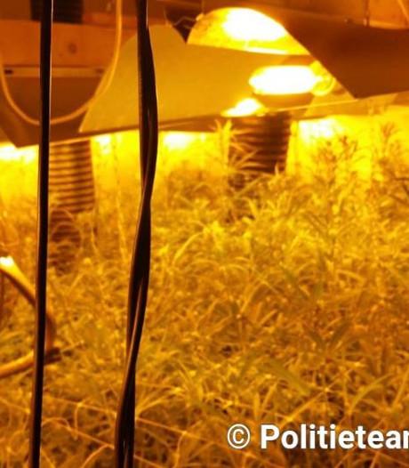 Zeer professionele hennepkwekerij in Dongen: planten konden uitgroeien tot hennepbomen