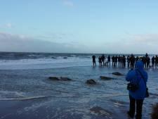 Zeehonden zwemmen vrijheid tegemoet aan de Brouwersdam