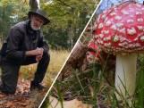 Dit is waarom het beter is om paddenstoelen te laten staan