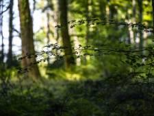 Une femme enceinte tuée par des morsures de chiens lors d'une balade en forêt