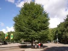 Bossen beter bestand tegen extreem weer: Miljoenen extra bomen in Brabant