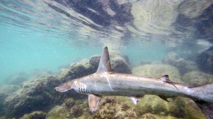 """Wetenschappers waarschuwen: """"Microplastics vormen bedreiging voor walvissen, haaien en manta's"""""""