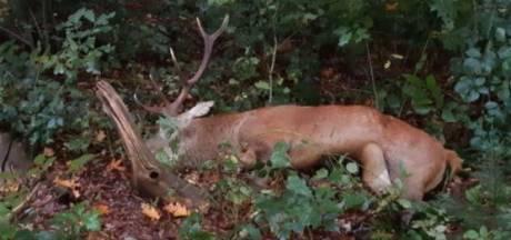 Auto en overstekend hert overleven aanrijding op de Veluwe niet