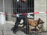Politie onderzoekt vliegenoverlast in uitgebrande woning in Aalst