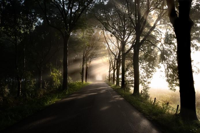 Zevenbergen, zonsopgang op de Koekoeksedijk.