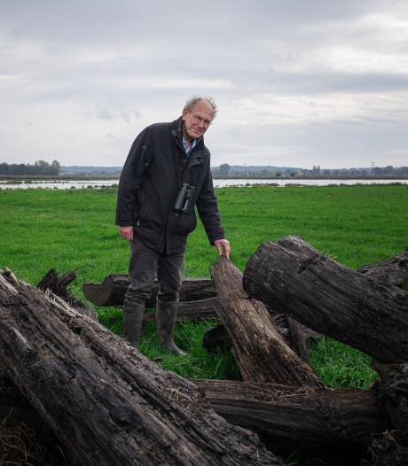 Gemist? De oudste bomen van Nederland en een stil stadsstrand