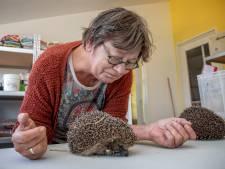 RTL Nieuws bezoekt Egelopvang Boskoop