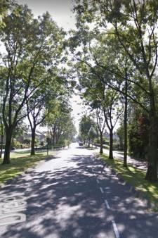 Geen verdere bomenkap langs Dreef in Kockengen