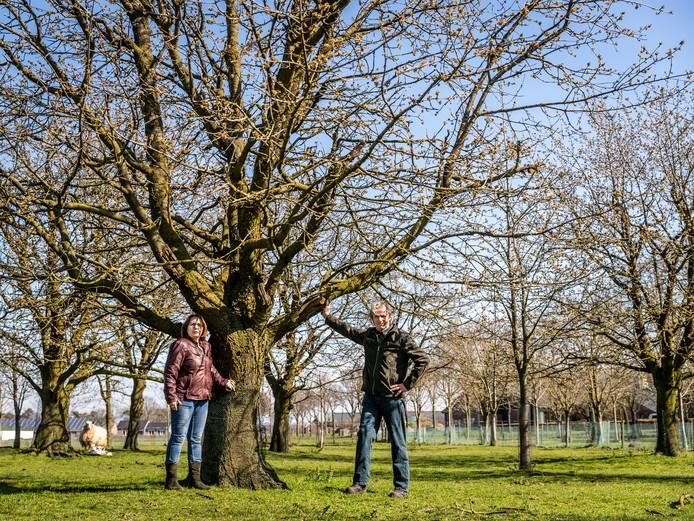 Gina en Willy van der Linden bij een hoogstamkersenboom.