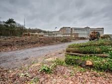 GroenLinks: 'groen tientje' voor herplant na kap boom