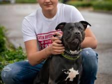 Advocaat: 'Politie vergoedt kosten na mishandelen hond Tommy met stroomstootwapen'