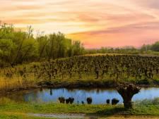 Natuurgebied Avelingen schittert in internationale foto-expositie