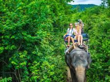 Dierenbeschermers: Olifantenleed in Thailand fors gestegen