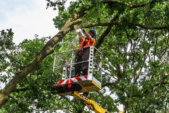 Als een boom een gevaar vormt voor de omgeving mag er gekapt worden