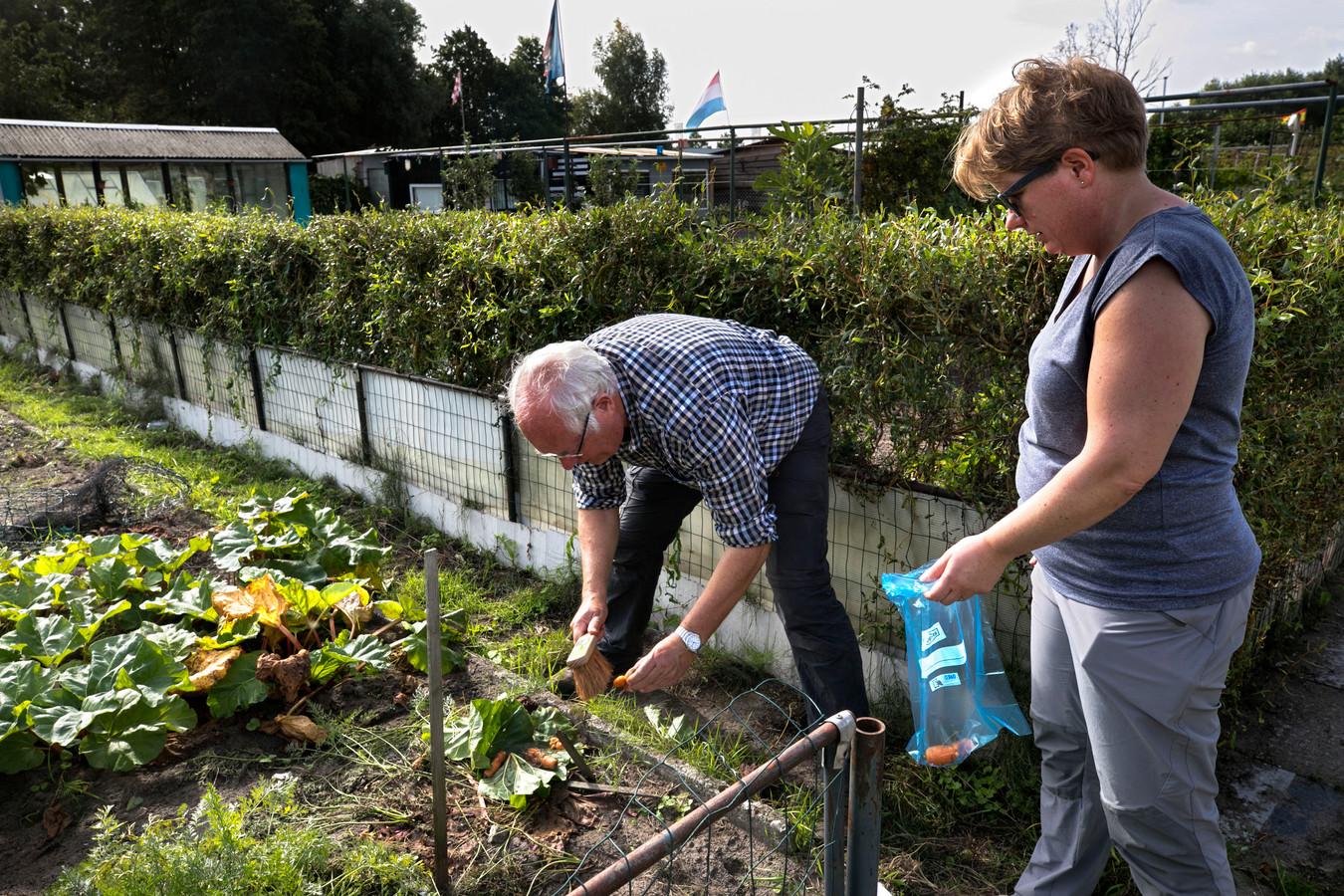 Albert Klarenberg van onderzoeks- en adviesbureau Tritium (l) en Tessa Pancras verzamelen wortels in de moestuinen aan de Sluisdijk in Helmond.